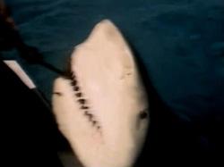 sharkhunter05