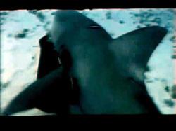 sharkhunter18